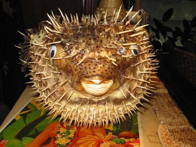 Large Puffer Fish Tiki Bar Lamp For Sale